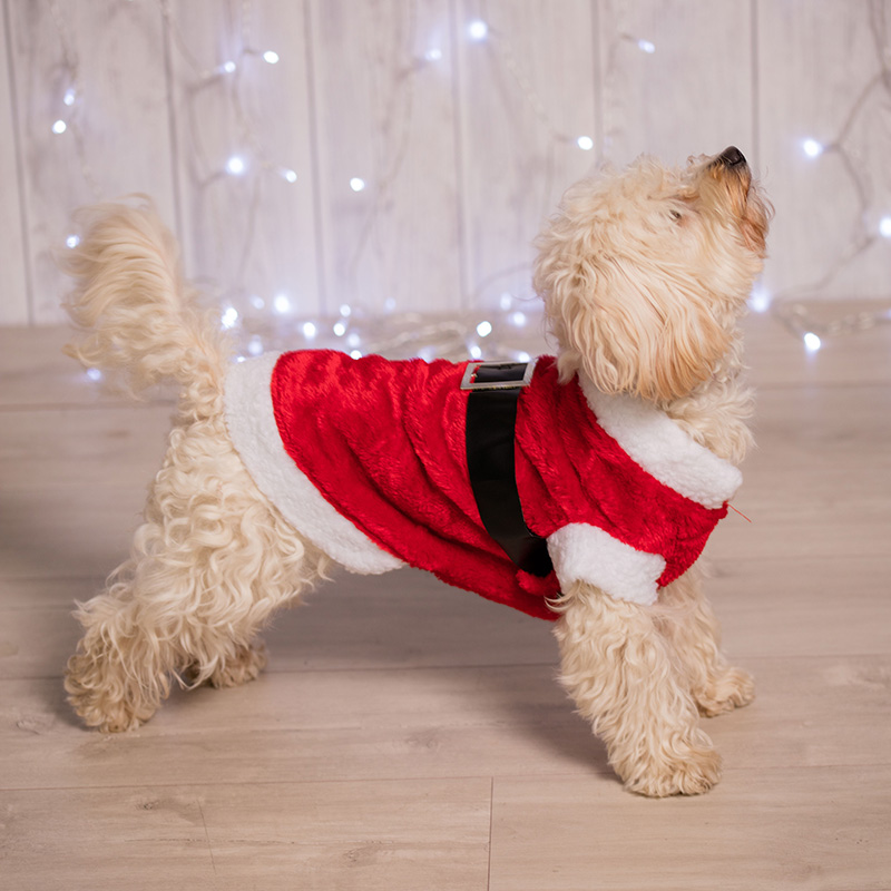 Kersttrui Mopshond.Kerstman Pakje Voor Uw Hond